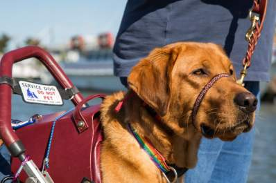Federal Funding for Service Dogs for Veterans with PTSD Discontinued