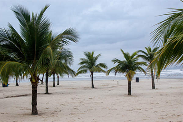 Palm trees on a beach under a cloudy sky.
