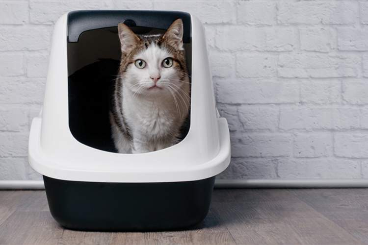 Cat in litter box.