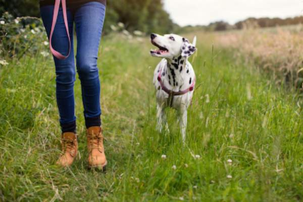 Woman walking in forest preserve with her dalmation.