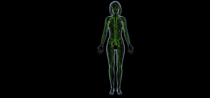 Lymphatic system of female