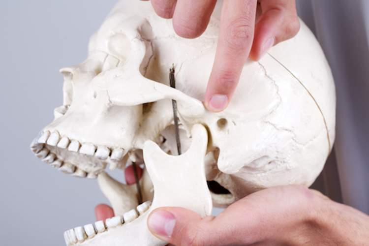 Doctor pointing to temporomandibular joint, on skull.