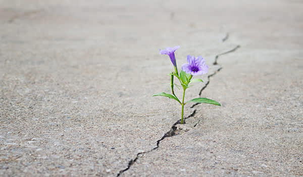 Flower growing through the cracks in the road.