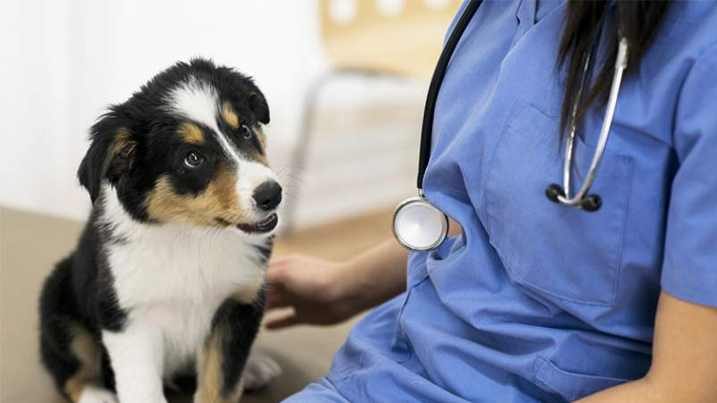 Puppy with female veterinarian.