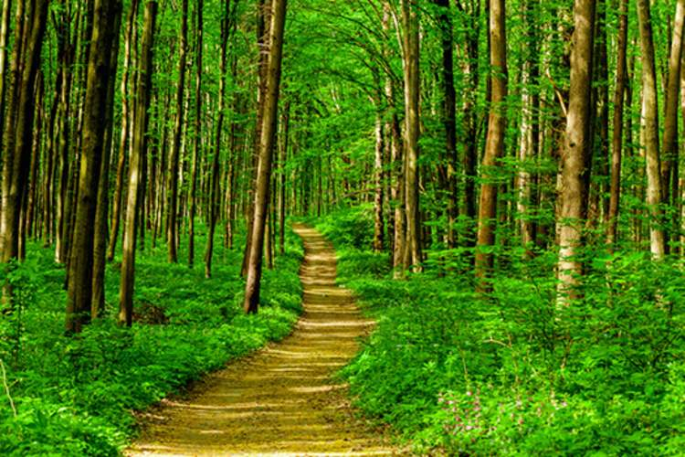 path in woods image