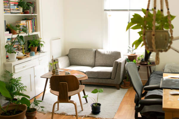 comfy living room with many plants