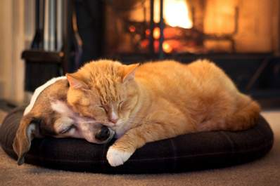 Pets sleeping near fireplace.