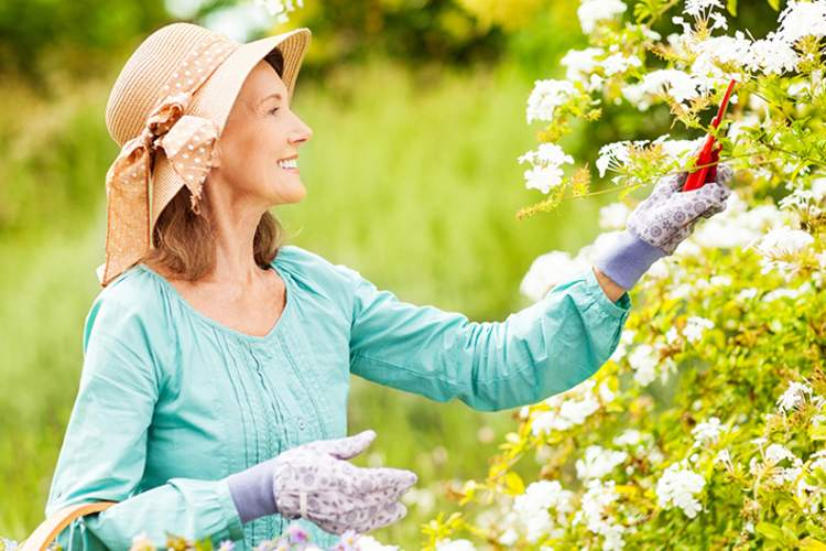 Middle age woman gardening.