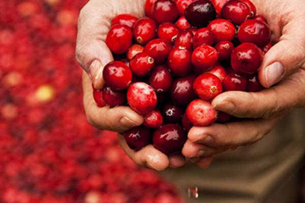 Handful of cranberries image.