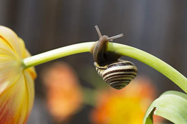Snail curled around a flower.