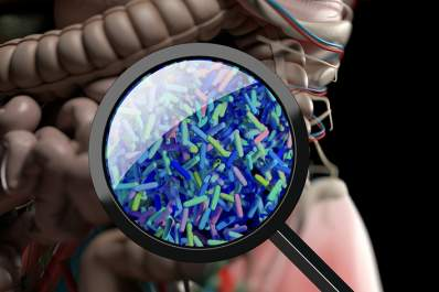 Gut bacteria through a magnifying glass.