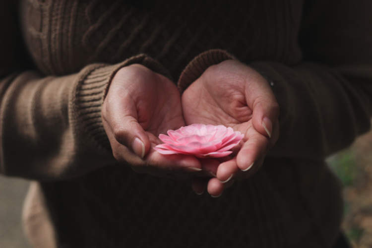 woman's hands holding pink flower