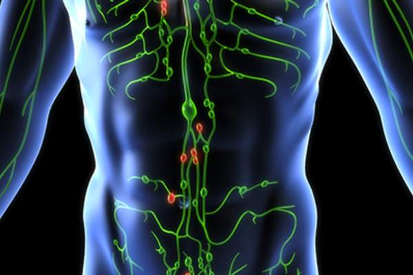 Lymphatic system and lymph nodes.