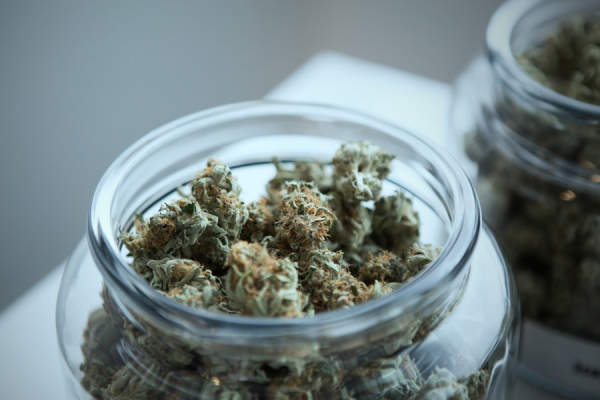 marijuana buds in a glass jar