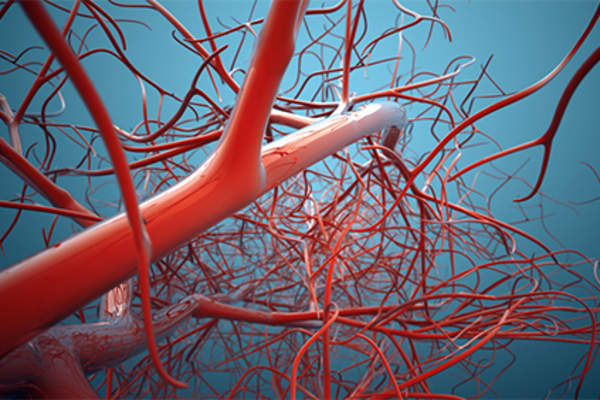 Veins and blood vessels.