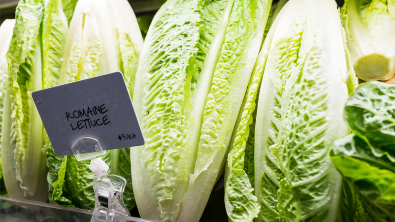 Romaine lettuce on shelf in store.