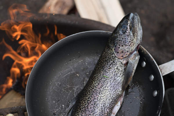 rainbow trout in pan over campfire
