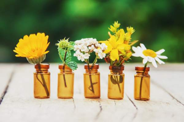 botanical extracts - flowers and plants in jars