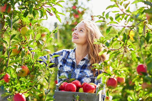 Woman picking apples, which are okay to eat with ulcerative colitis.