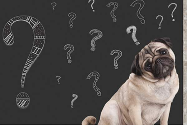 Questioning dog in front of chalk board with question marks.