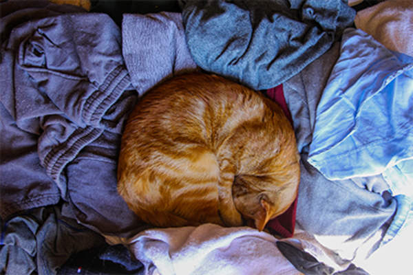 Cat sleeping in the laundry.
