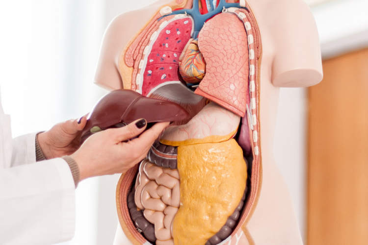 Liver Cancer: Treatment, Symptoms, Causes, and Real Stories