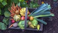篮子在包含秋天收获蔬菜的庭院里。