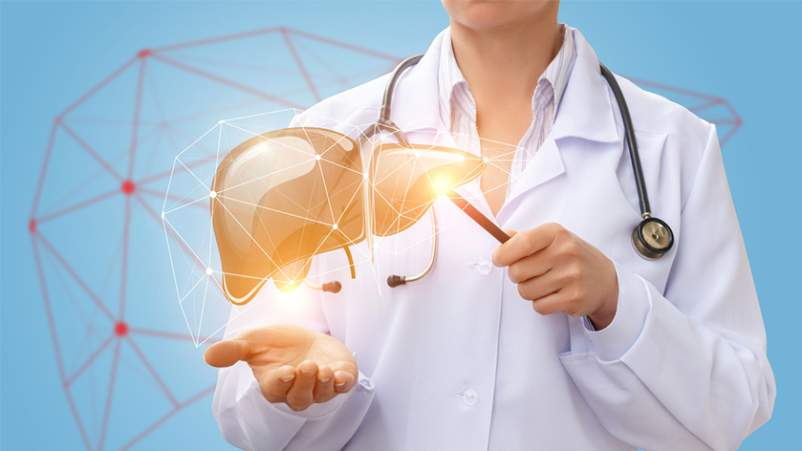 Doctor showing computer generated model of human liver.