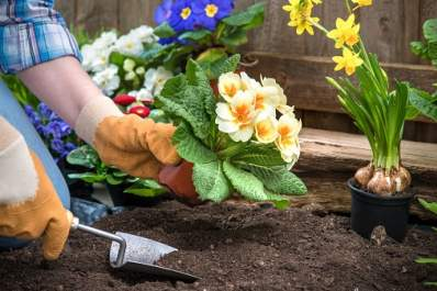 Gardening Safely to Avoid Fractures