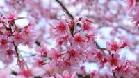 Springtime flower blossoms may trigger sinusitis.