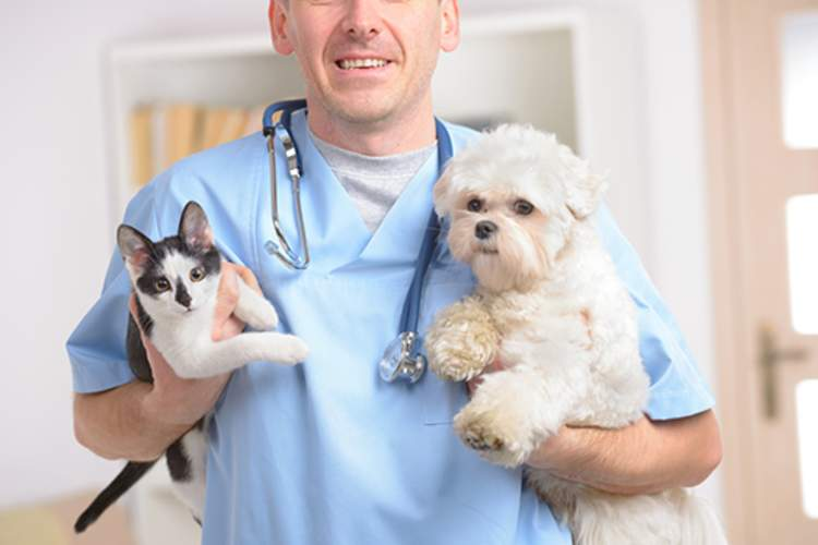 Veterinarian holding small dog and cat.