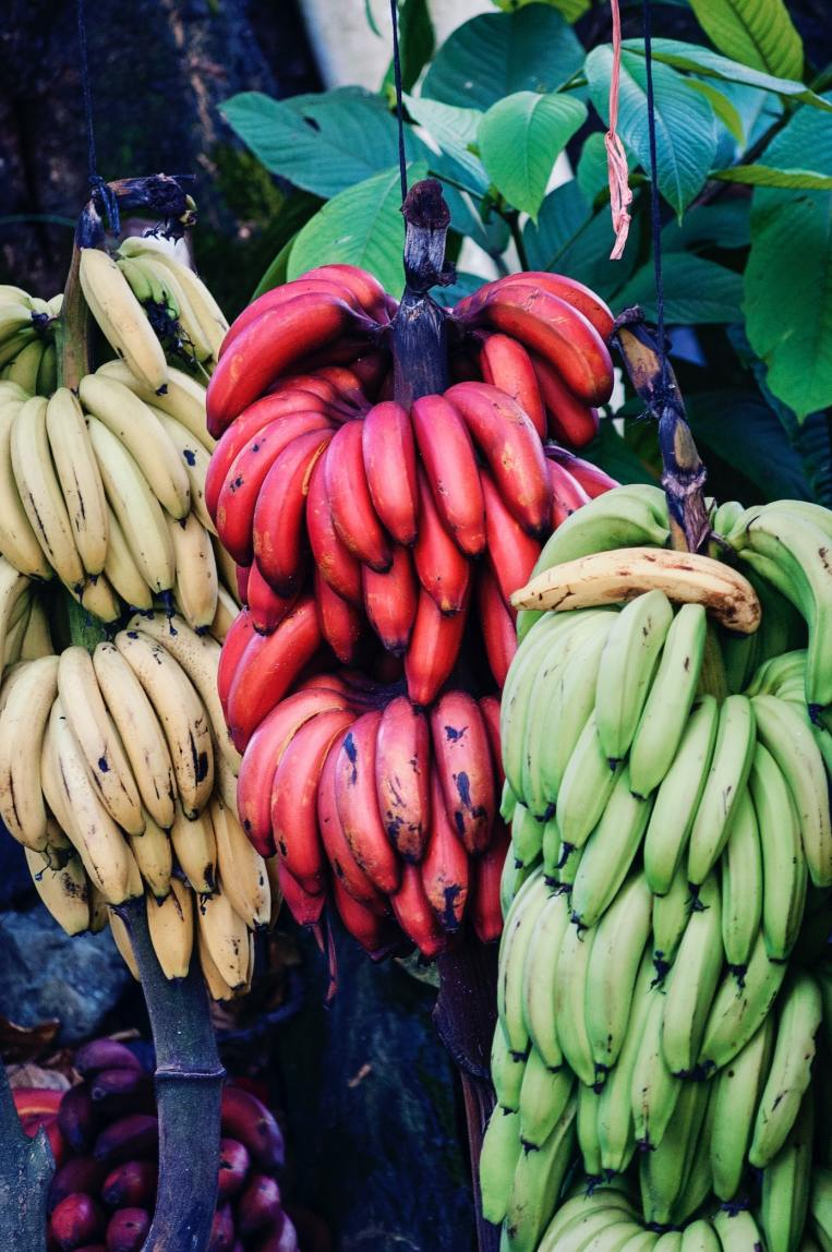 banana-variety-green-cavendish-sweet.jpg