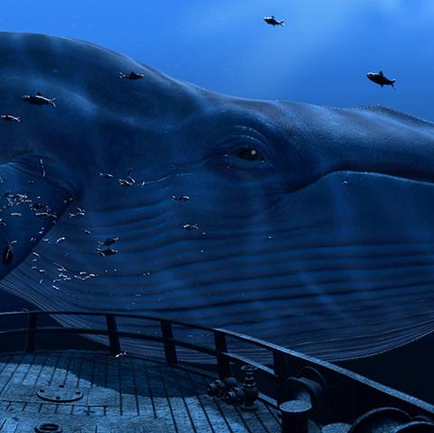 HTC Vive Whale Demo
