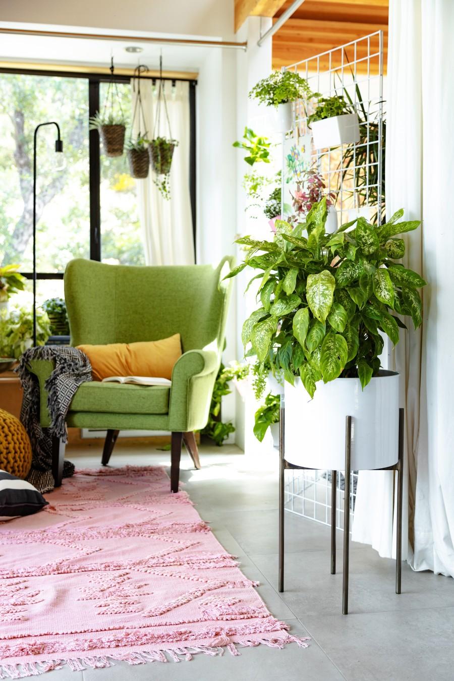 The Essential Guide To Indoor Plants Joybird