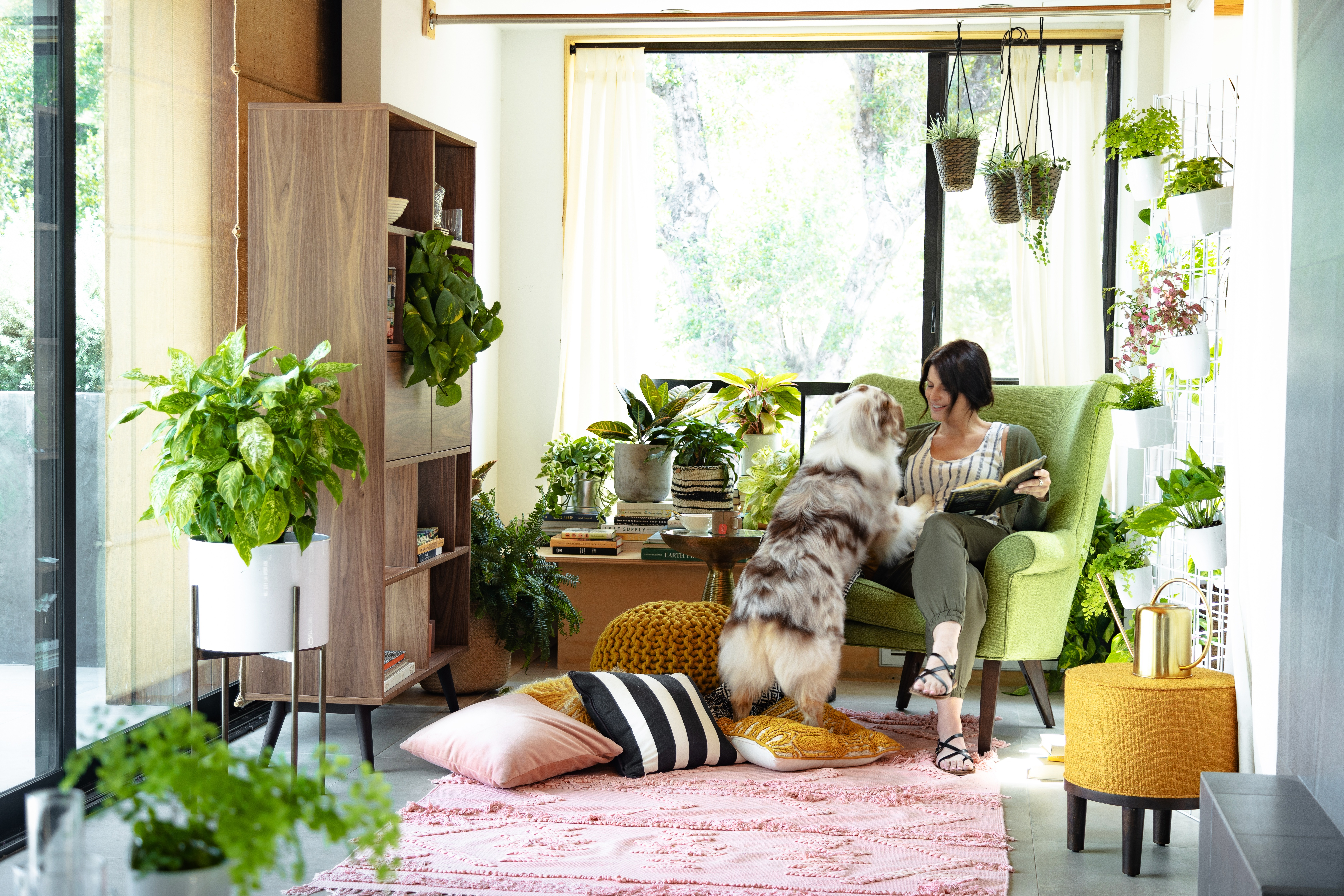 The Essential Guide To Indoor Plants