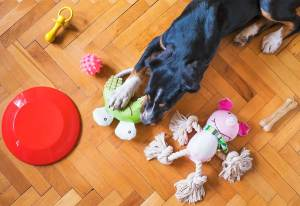 What Are Good Teething Toys For Dogs?