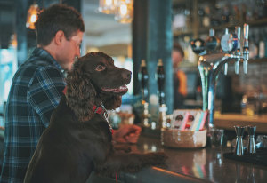 How To Find Dog Friendly Restaurants
