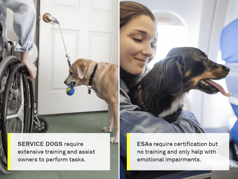 service dog vs esa