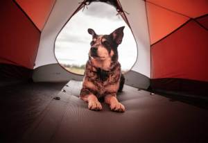 Your First Camping Trip With Your Dog: What to Know