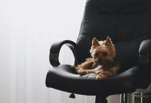 An Etiquette Guide for Bringing Your Dog to the Office