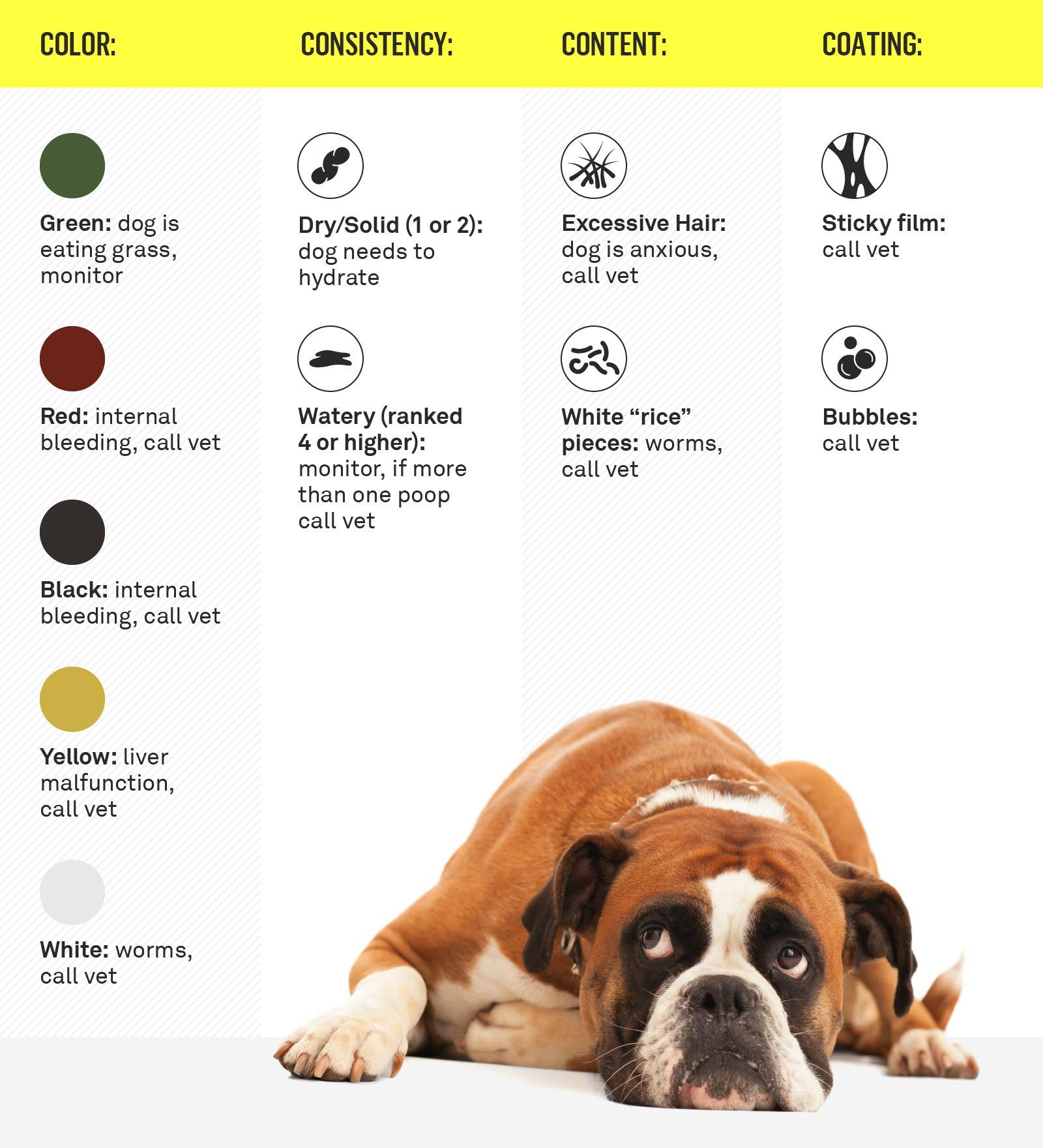 yellow stuff in dog poop