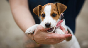 Train Your Puppy to Stop Biting in 9 Steps