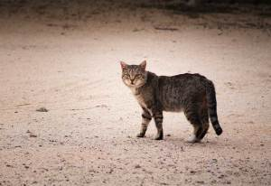 What to do if You See a Feral Cat