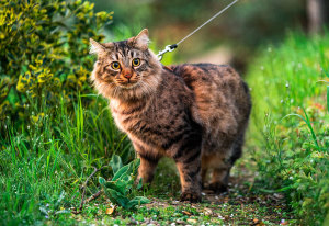 Should You Take Your Cat On A Walk?