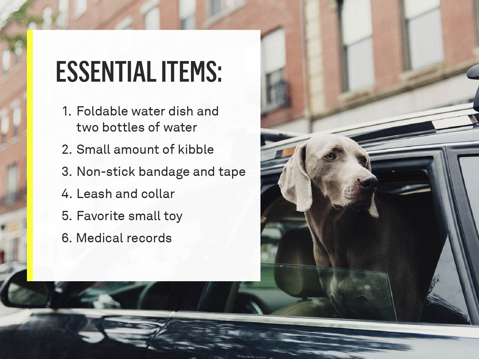 essential-items
