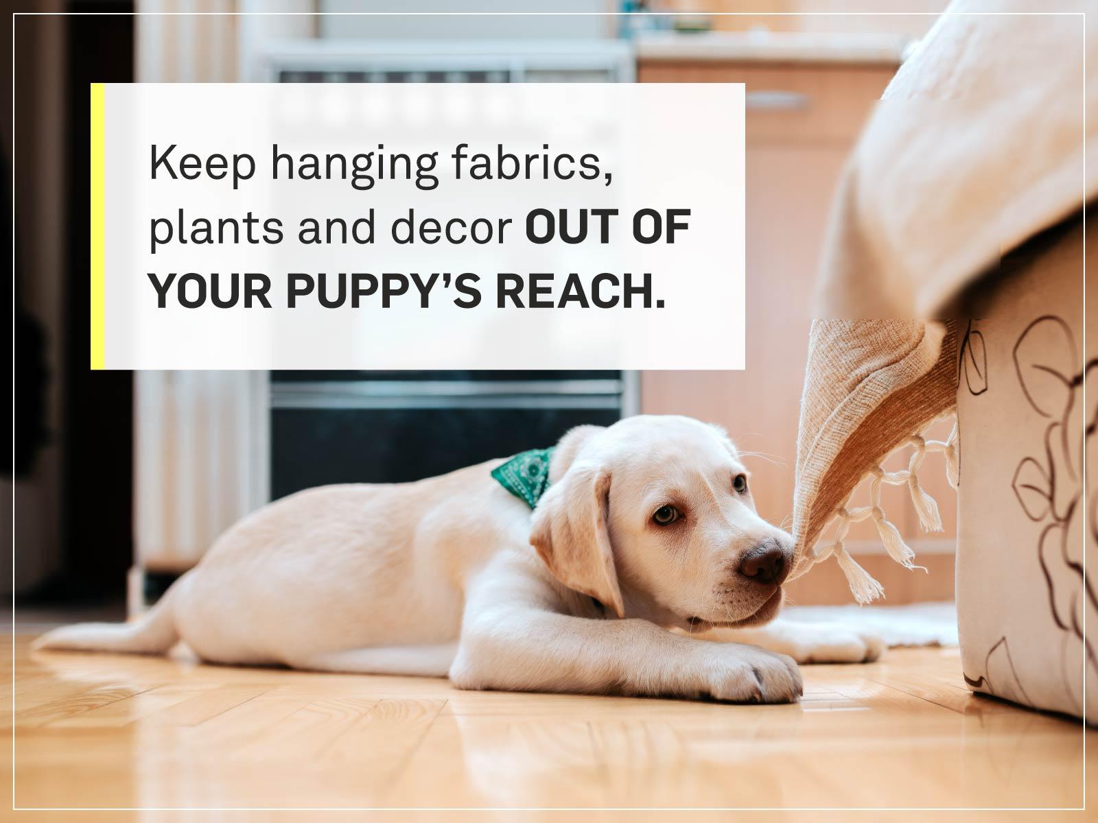 new puppy checklist 14-puppy-trouble