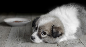 How To Deal With Your Puppy's Fear Issues