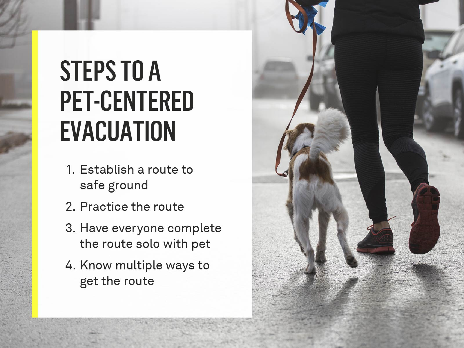 pet-centered-evacuation