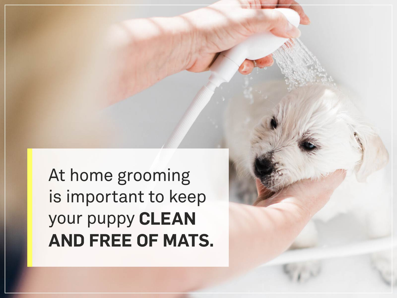 new puppy checklist 5-grooming