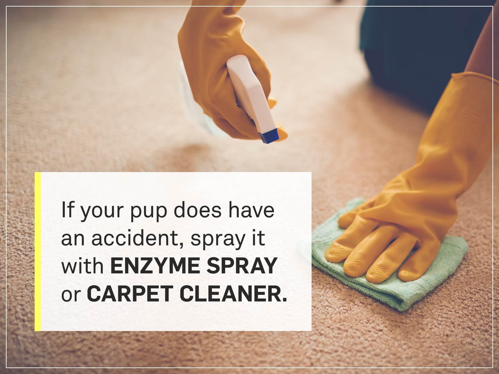 new puppy checklist 8-cleaning-carpet